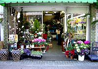 生花 一条妖怪ストリート さくらい花店